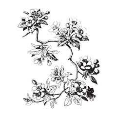Botanical branches with leaves and flowers on white background.
