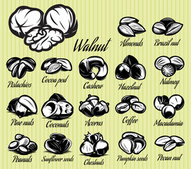 a set of eighteen stylish vector templates of nuts for menu
