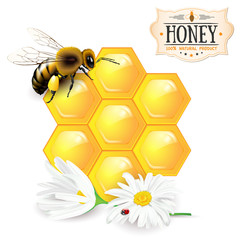 Bee, honeycomb, daisies and honey label