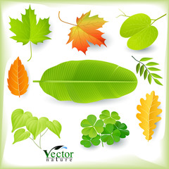 A variety of natural leaves