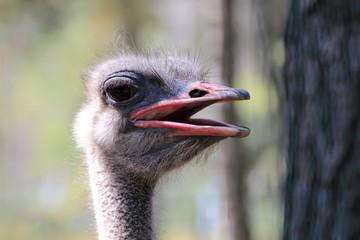 The head of an ostrich.