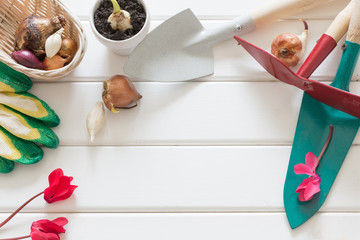 gardening scoop with flowers plant on wooden background