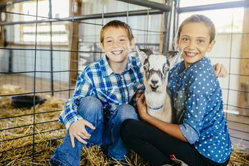 Caucasian brother and sister petting goat in barn