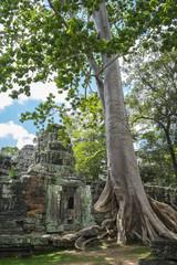 Tree growing on ancient Ta Prohm Temple, Siem Reap, Siem Reap, Cambodia