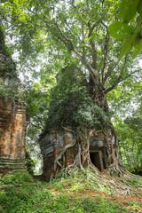 Tree roots growing on Prasat Pram Temple, Koh Ker, Preah Vihear, Cambodia