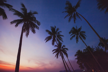tropical landscape by night, silhouettes of palm trees on the beach with sunset sky