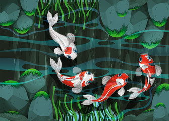 Four fish swimming in the pond