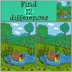 Children games: Find differences. Duck and cute 