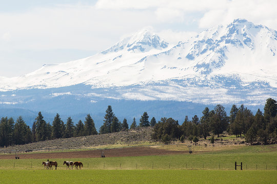 Horses in a field under Sisters, Oregon