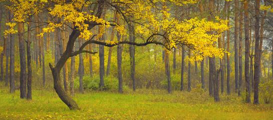 Dance_of_autumn
