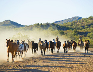 Ranchers herding horses on dirt path