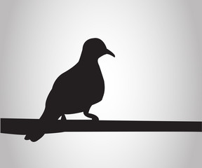 Pigeon sits on a pole silhouettes on the white background