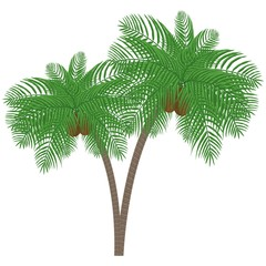 Palm tree with coconuts on a white background. Can be used to advertising, decoration of cards, phones, baby food, toys, websites, furniture, bags, home decoration, linens etc.