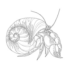 Vector illustration of Hermit Crab in the round gastropod shell isolated on white background. Underwater crustacean in contour style for coloring book.