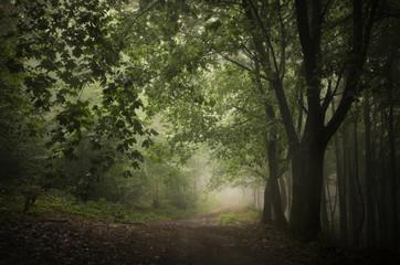dark green woods path