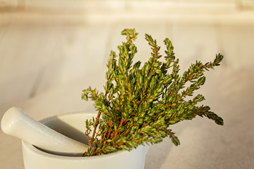 Mortar with Fresh Green Thyme on White background