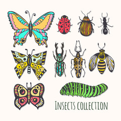 Colorful insects collection. Hand drawn set for icons, logo or print. Vector illustration
