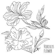Hibiscus flower.Linear hand drawing. Vector black and white image. Template for coloring books.Botanical illustration.