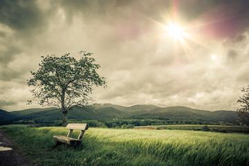 Photo sur Aluminium Kaki Paysage calme et nostalgique pour le recueillement