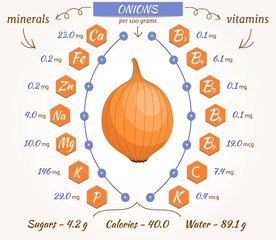 Onion vector infographics. The content of minerals and vitamins in fresh onions. Illustration about nutrients, vegetables, health food, diet. Flat style.