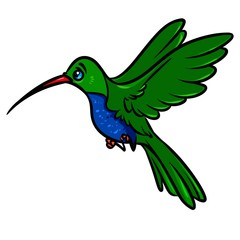 Bird hummingbird cartoon illustration isolated image animal character