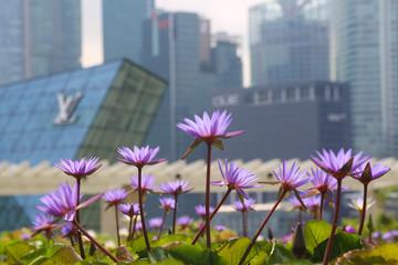 Impressionen von Singapur und tropischer Vegetation