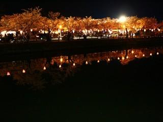 水面に浮かぶ夜桜
