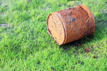 rusty can on young grass.