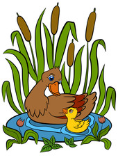 Color pictures: birds. Mother duck swims with her little cute duckling in the pond. They are smile and happy.