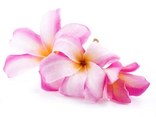 beautiful plumaria flowers on white background