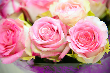 Tender pink rose close. Background of roses. The flowers are beautiful. A bouquet of roses.