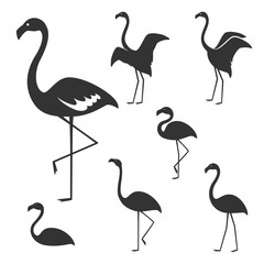 Flamingo, Vector illustration.