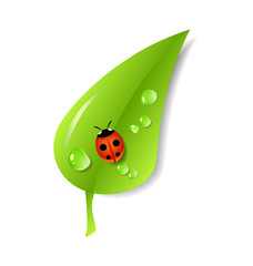 Green leaf with ladybug and dew. Ecology concept. Vector Illustration. EPS 10.