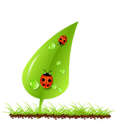 Green leaves with ladybugs and dew grey background. Vector ecology concept. EPS 10.