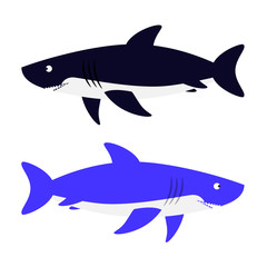 Shark vector illustration. Isolated aggressive sea carnivore