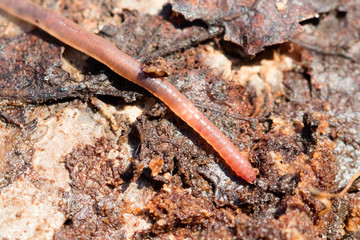 Earthworms on a piece of wood, selective focus