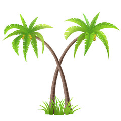 Two coconut palm trees on white
