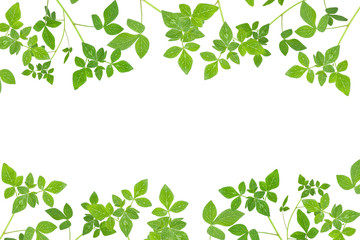 Fresh Green leaf frame isolated on white background.