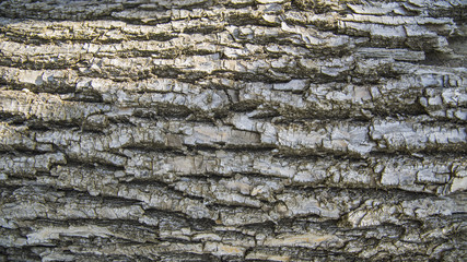 Detail of wooden tree bark texture