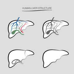 Human liver anatomy structure. Human internal organ icons set