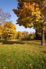 autumn forest, Belarus