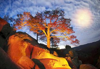 Foto op Canvas Australië Dovbush Rocks night