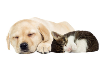 Puppy and kitten sleeping
