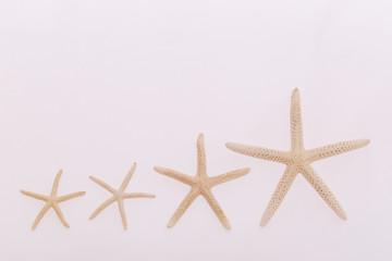 White starfish isolated on white background. Seashell on white background.
