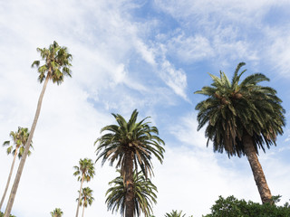 green palm trees and sky