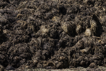 manure for fertilizer