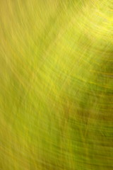 blurred colored background with a predominance of green summer color
