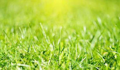 natural background grass