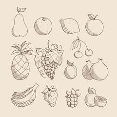 Collection of sketched hand drawn linear friuts and berries: apple, pineapple, grape, lemon, orange, banana, pear, cherry, strawberry, plum, pomegranate