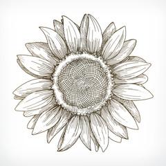 Sunflower sketch, hand drawing, vector illustration